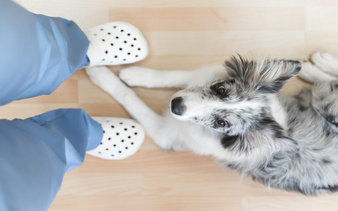 How To Choose The Best Veterinary Flooring